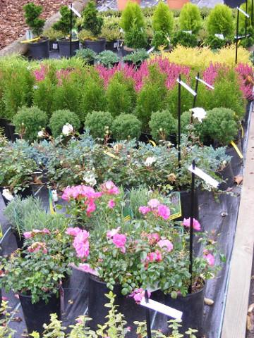 Pflanzen auf dem Geländer der Außenstelle Fulda.